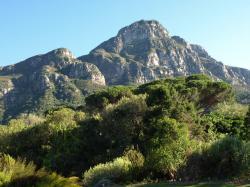 Jardins botaniques de Kirstenbosch