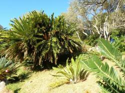 Jardins botaniques de kristenbosch
