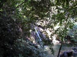 Jungle du Chiapas