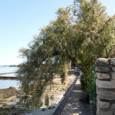 Locmariaquer promenade côtière