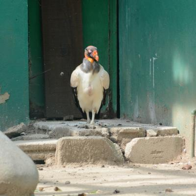 Zoo Parc de La Venta